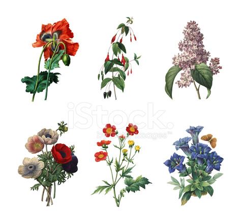 Conjunto De Varias Flores Flor Antiguos Ilustraciones Stock Vector