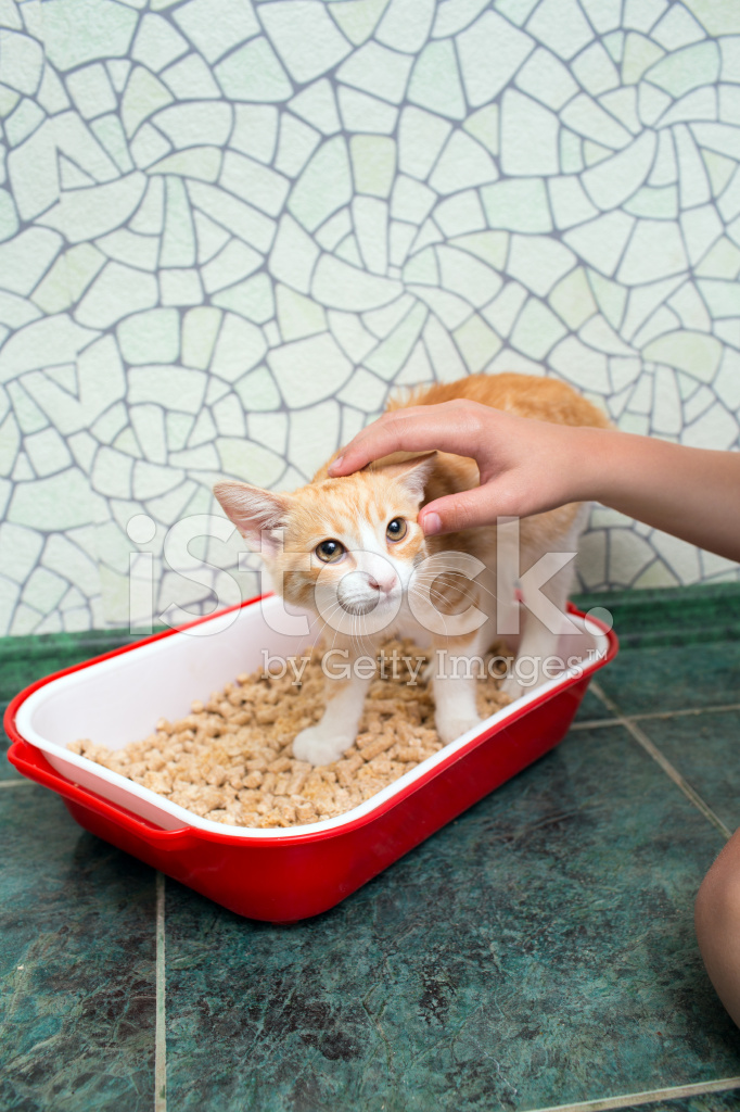 Tier Cat Toilet