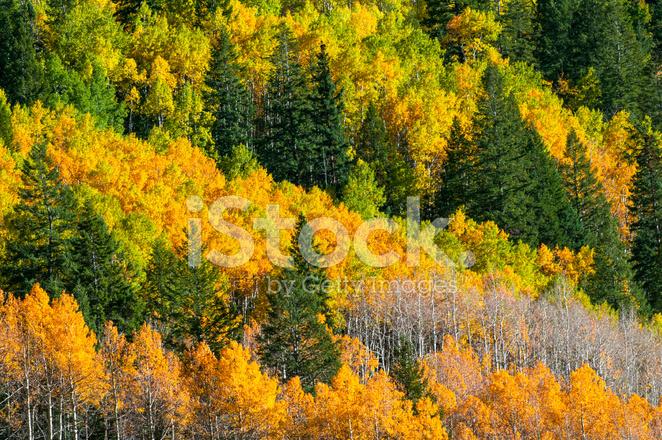 Schone Herbst Hintergrund Stockfotos Freeimages Com
