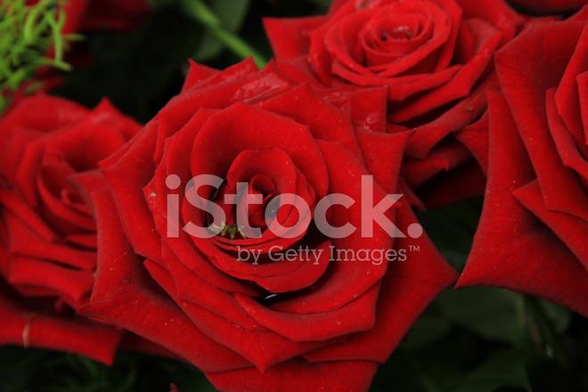 Rote Rosen Im Brautstrauss Stockfotos Freeimages Com