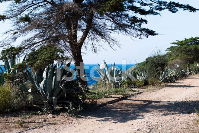 Zone Isola del Giglio