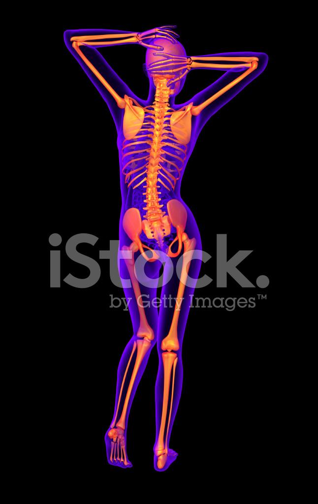 3d Render Medizinische Illustration Des Menschlichen Skeletts ...