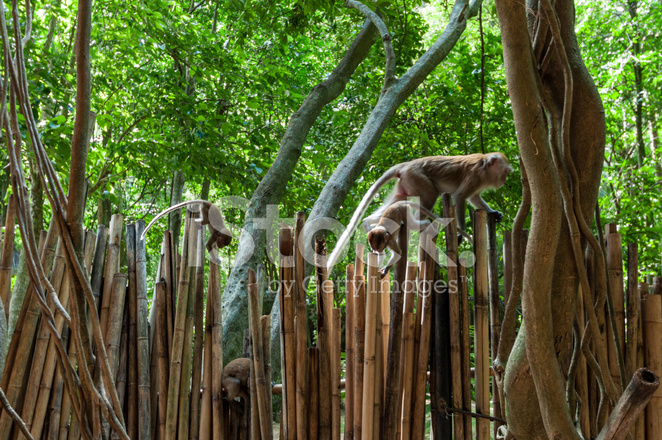 Railay Beach In Krabi Thailand Monkeys Stock Photos