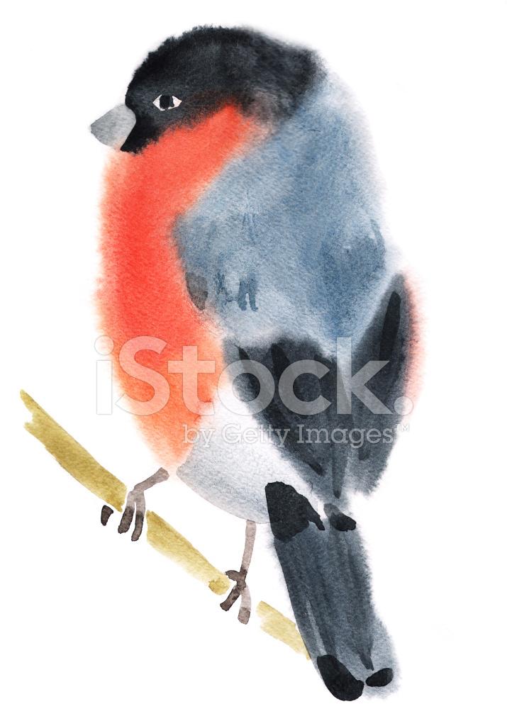 Akwarela Ilustracja Ptak Gil Zdjęcia Ze Zbiorów Freeimagescom