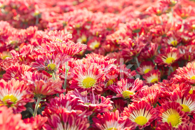 Много цветов красивых