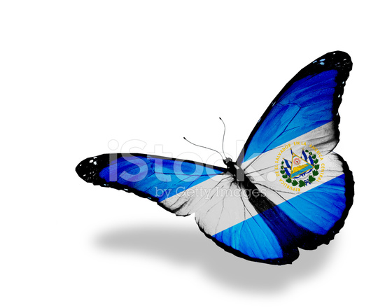 Indian Flag Butterflies: Salvador Flag Butterfly Flying, Isolated On White