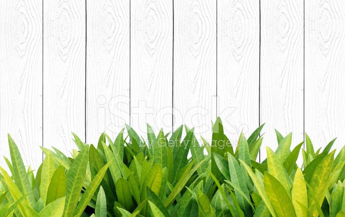 Hojas de color verde y la pared de madera vintage fondo - Color verde hoja ...