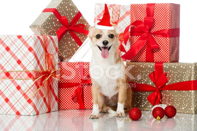 Фото собачка с подарком