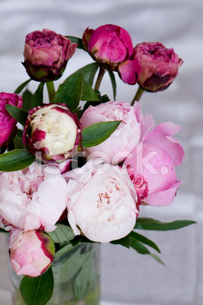 Bukiet kwiat w piwonie zdj cia ze zbior w for Nauka coffee table