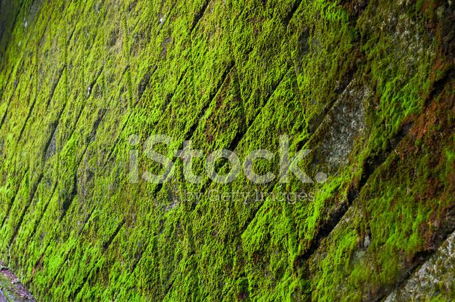 Parete verde muschio con piastrelle fotografie stock freeimages