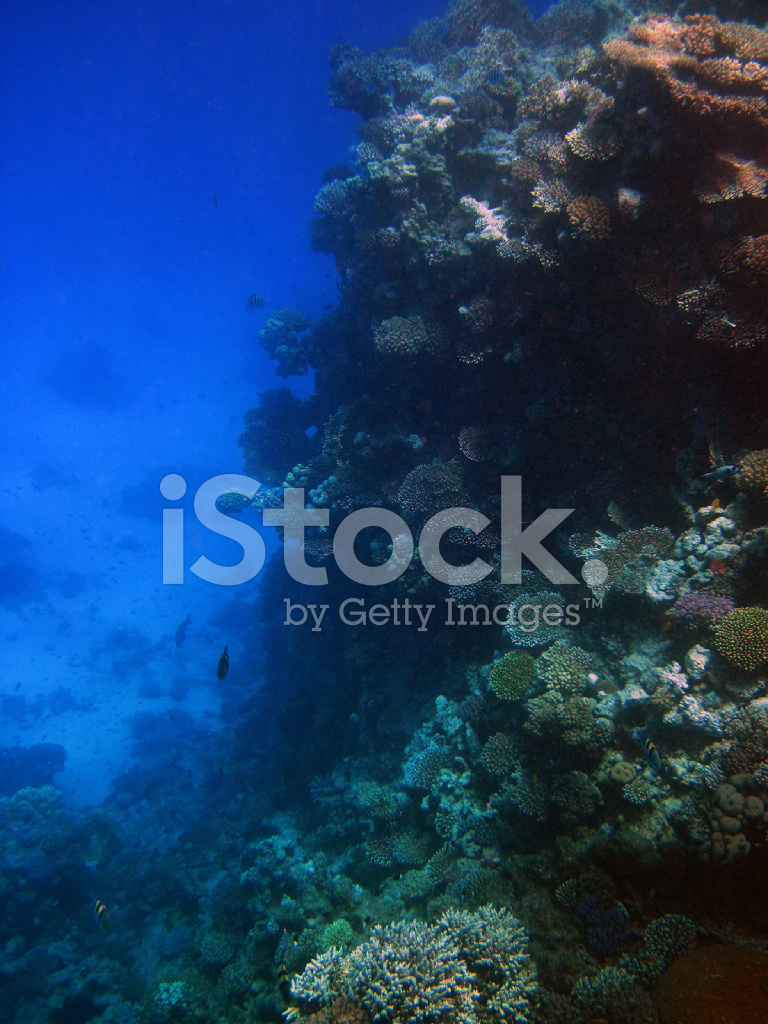 Arrecife De Coral Del Mar Rojo Fotografias De Stock Freeimages Com