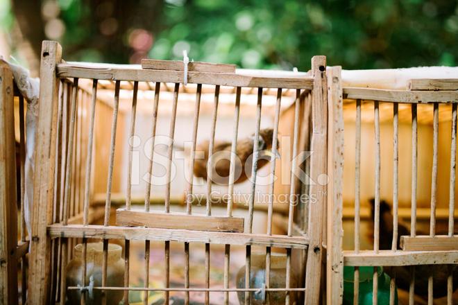 cage oiseaux en bois les oiseaux chanteurs hong kong photos. Black Bedroom Furniture Sets. Home Design Ideas