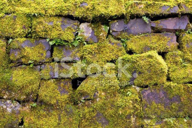 Muro di muschio con felce fotografie stock freeimages