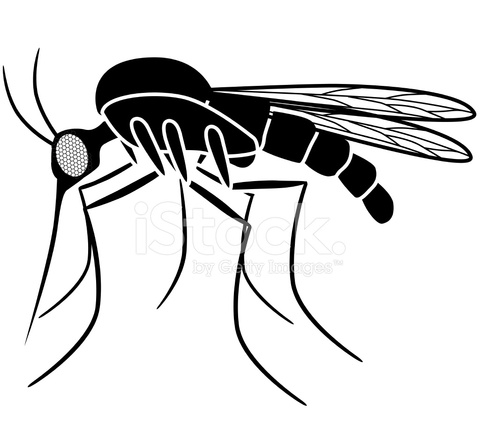 Mosquito Coloring Page Clipart 1