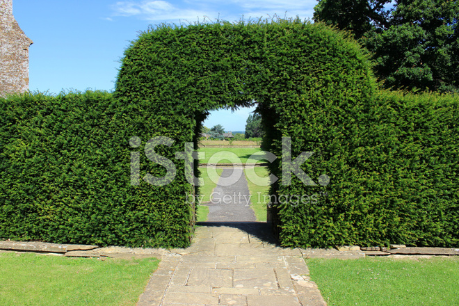 Image Of Clipped Yew Tree Archway Topiary Arch In Garden Stock Photos Freeimages Com Vampirina tells the story of a young vampire. image of clipped yew tree archway