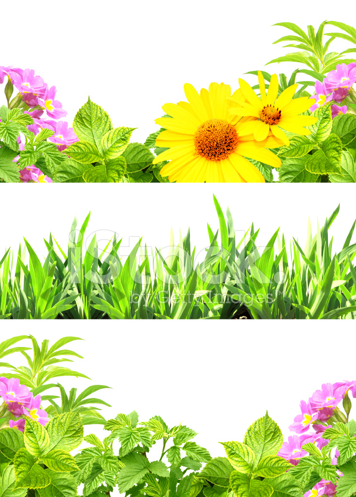 Frames With Summer Flowers and Green Grass Stock Photos - FreeImages.com