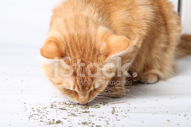 how to stop a cat from peeing everywhere