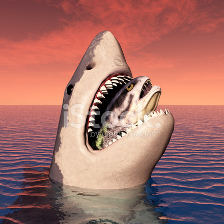 Great White Shark Eating Stock Photos - FreeImages.com