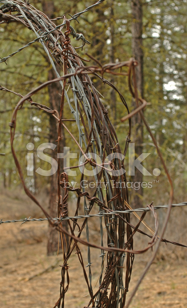 Barb wire coil stock photos freeimages