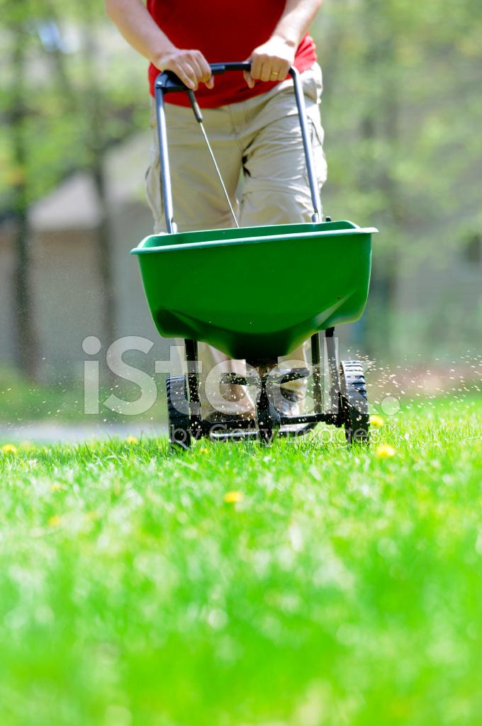 Gödsla gräsmattan