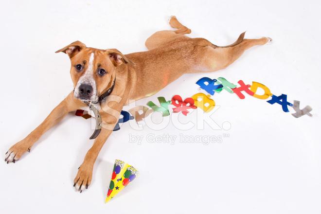 Geburtstag Hund Stockfotos Freeimages Com