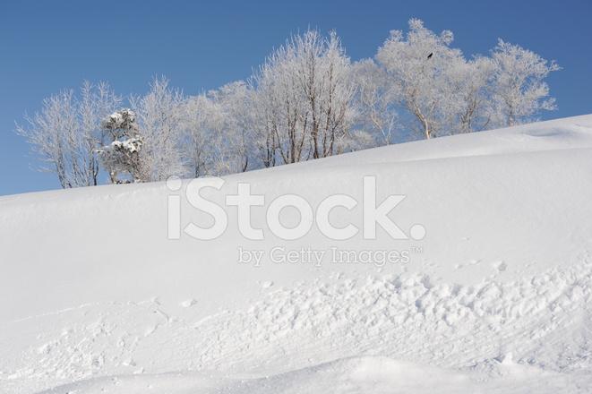 Vita Vinterlandskap Med Snöklädda Träd I Hokkaido I Japan ...
