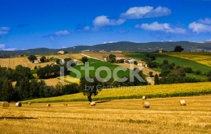 Paesaggio Rurale Umbria Con Girasoli Fotografie stock - FreeImages.com