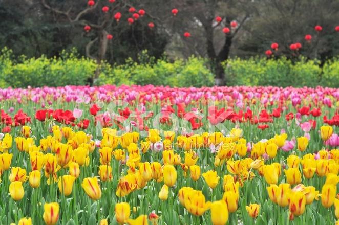 Schöne Blumen Im Garten Nach Regen Stockfotos Freeimagescom