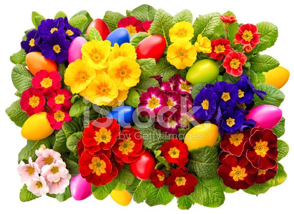 Fiori di primula con decorazione di uova di fiori di for Fiori di primavera