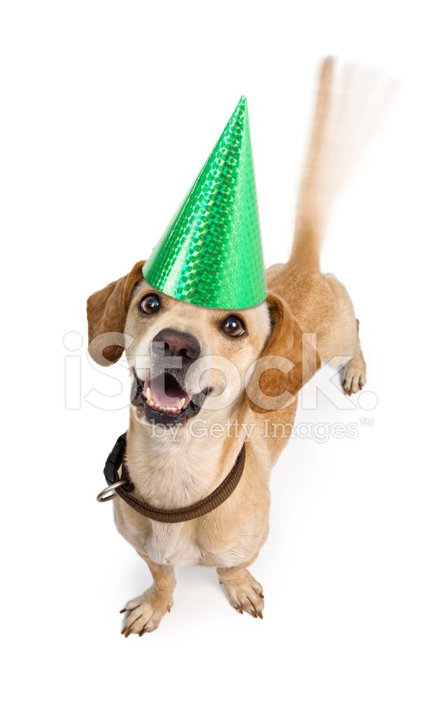 Buon Compleanno Cane Scodinzolante Coda Fotografie Stock