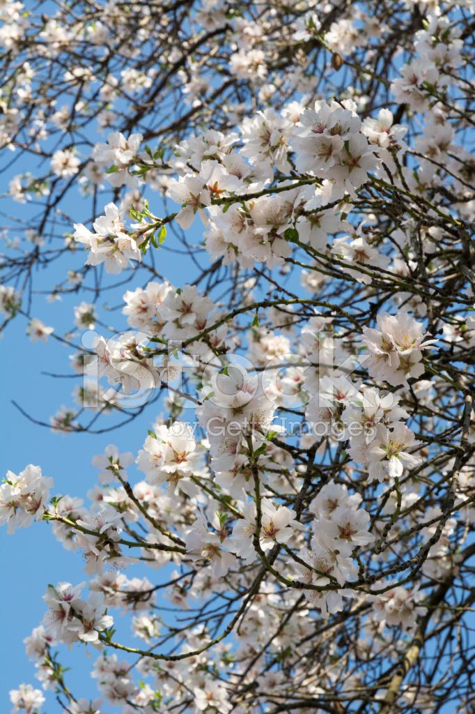 Alan Bahar çiçek Açan Ağaçlar Stok Fotoğrafları Freeimagescom