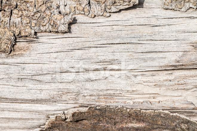 Texture Bois Brut