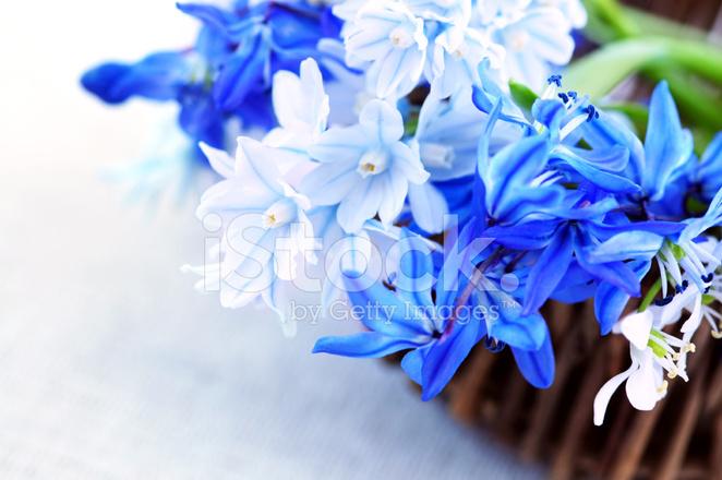 Erste Fruhlingsblumen Stockfotos Freeimages Com