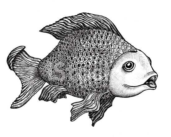 Fish Drawing 664453 on Realistic Tropical Fish Clip Art