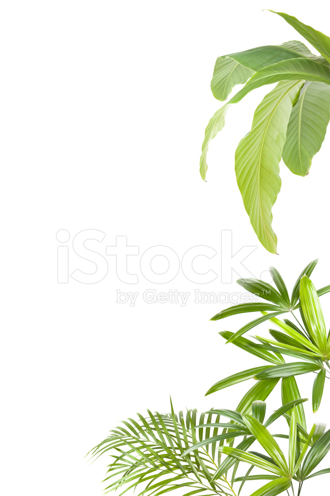 xxl tropical plants frame stock photos. Black Bedroom Furniture Sets. Home Design Ideas