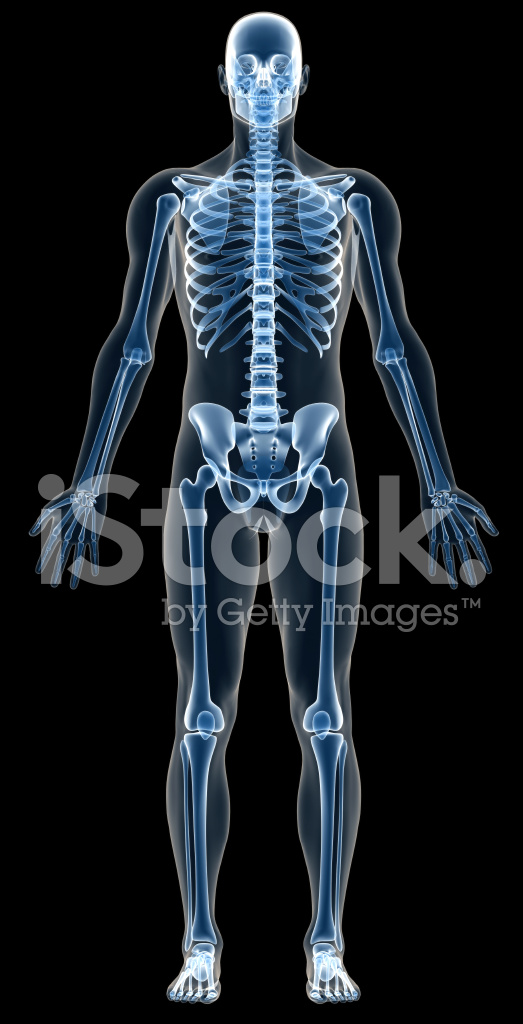 X Ray Human Body of A Man With Skeleton for Study Stock Photos ...