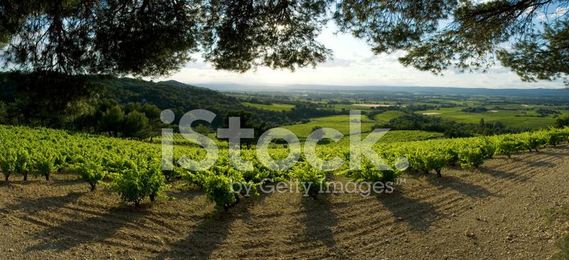 Champ De Vigne champ de vigne panoramique stock photos - freeimages