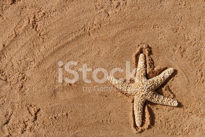 Stella Di Mare Su Una Spiaggia Di Sabbia Ideale Per Sfondo