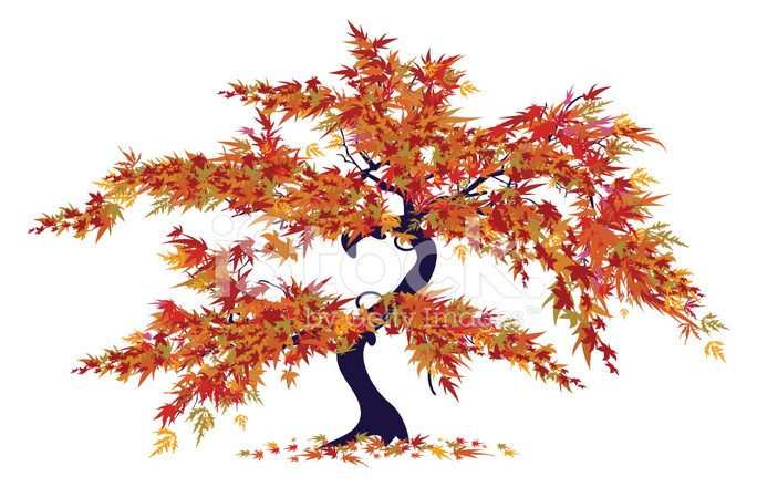 Japanese Maple Tree Stock Vector Freeimages Com From wikipedia, the free encyclopedia. japanese maple tree stock vector