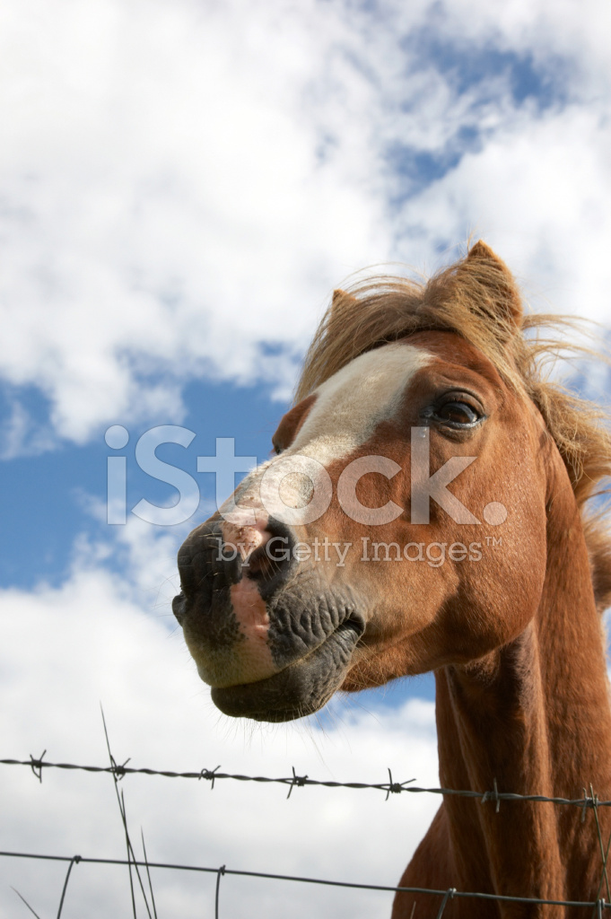 Horse Head Over Wire Fence From Below Stock Photos Freeimages Com