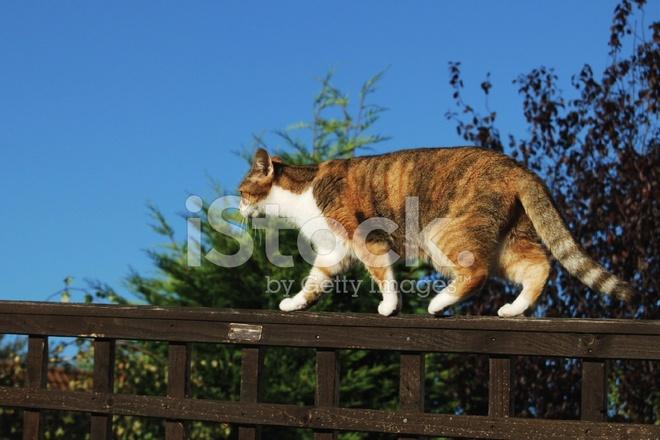 Recinzione Giardino Per Gatti.Gatto Sulla Recinzione Giardino Fotografie Stock Freeimages Com