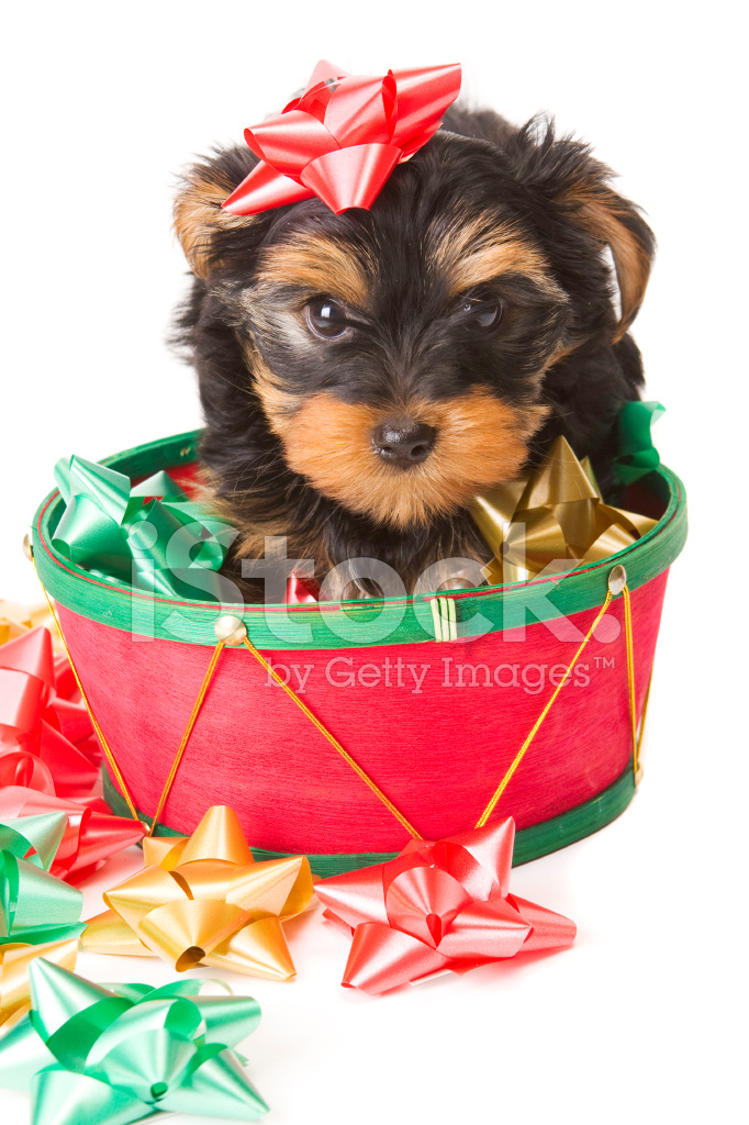 Top Puppies Bow Adorable Dog - 7589643-adorable-puppy-dog-with-holiday-bows  Snapshot_166640  .jpg