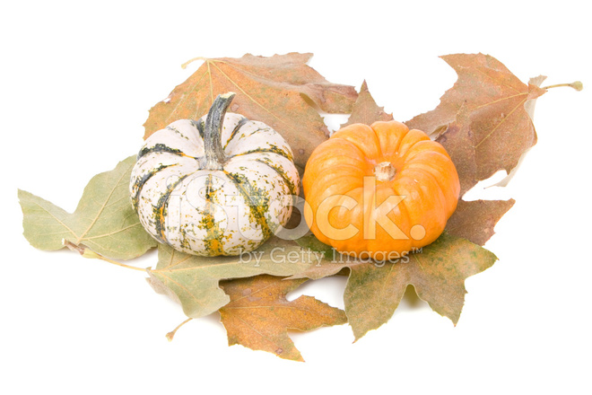 Decorative pumpkins and maple leaves stock photos