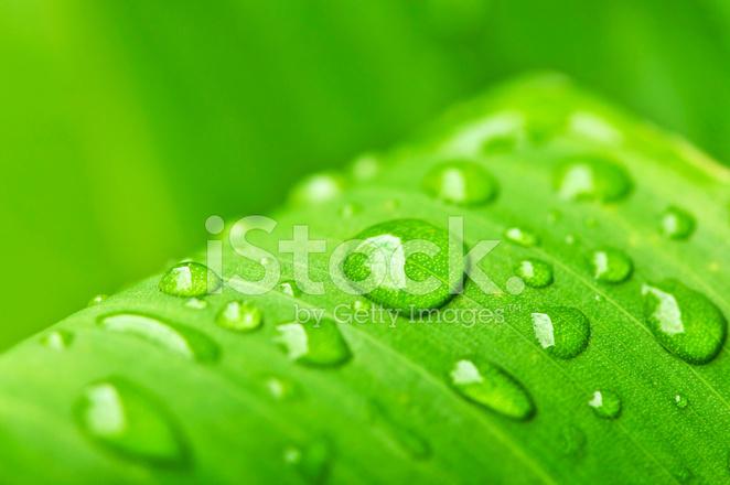 Yağmur Damlaları Ile Yaprak Yeşil Arka Plan Stok Fotoğrafları