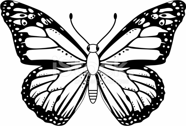 black  u0026 white monarch butterfly stock vector