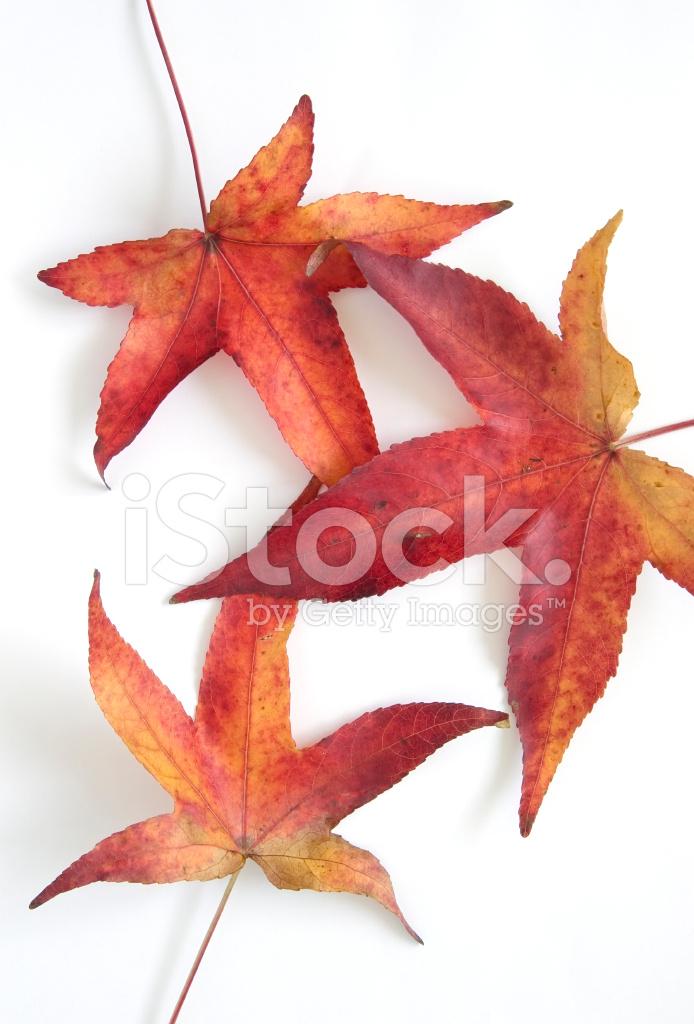 4 1 слово цветы листья