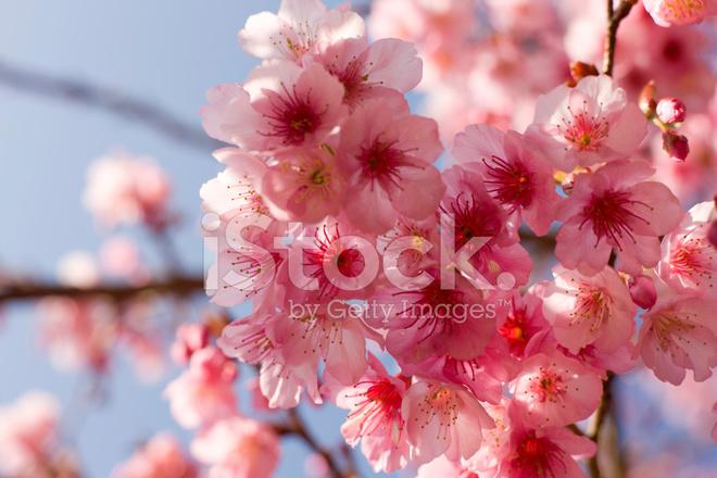 Fondo De La Flor De Fotografías De Stock Freeimagescom