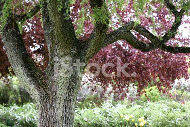 Bomen In Tuin : Bomen tuin in denemarken stockfoto s freeimages