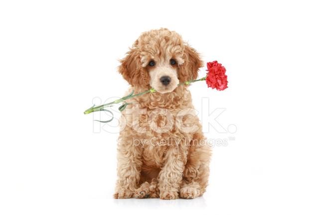 Cupid Rescue Dog