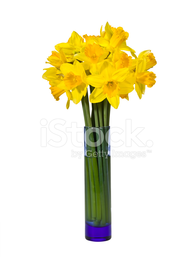 vase of daffodils stock photos freeimages com
